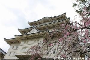 小田原城としだれ桜