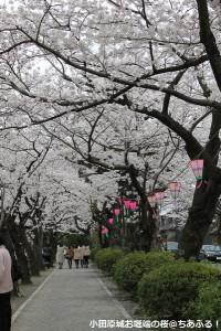 お堀端の桜並木
