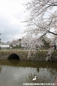 お堀端の桜と鳥