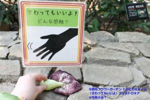 小田原フラワーガーデン 「さわってもいいよ」の表示