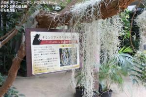 小田原フラワーガーデン チランジアの樹名板