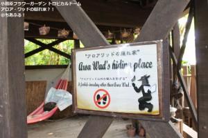 小田原フラワーガーデン トロピカルドーム温室 アロア・ワッドの隠れ家