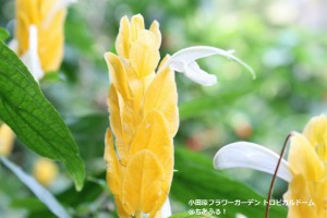 小田原フラワーガーデン トロピカルドーム温室