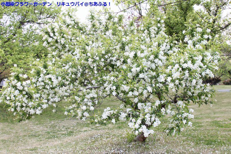 小田原フラワーガーデンに行ってきました!屋外で見れる花(4月)編