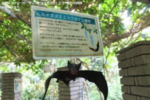 ヒスイカズラとコウモリの関係