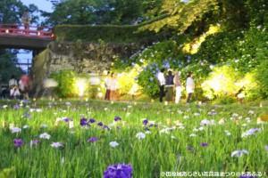 紫陽花花菖蒲祭りライトアップ